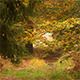 A Way In Colorful Autumn Forest - VideoHive Item for Sale