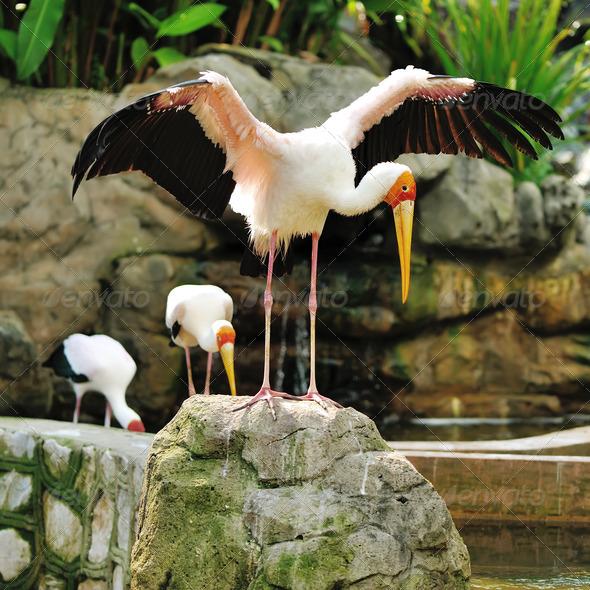 Stork bird - Stock Photo - Images
