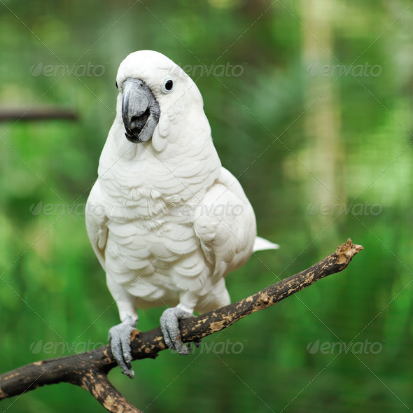 Parrot bird - Stock Photo - Images