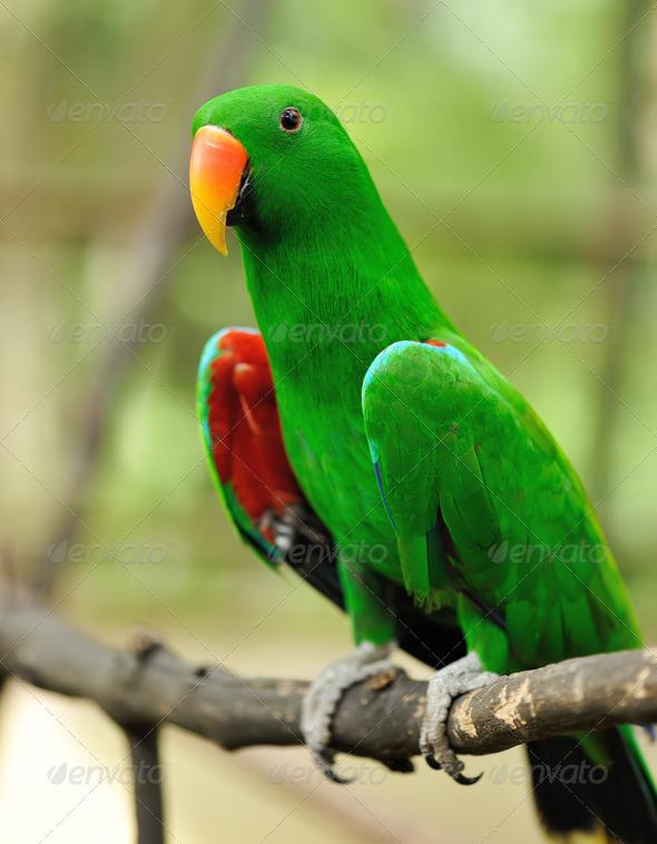 Parrot bird - Stock Photo - Images