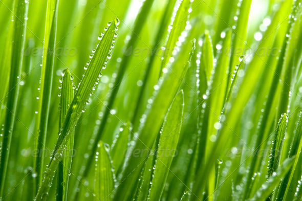 fresh grass - Stock Photo - Images