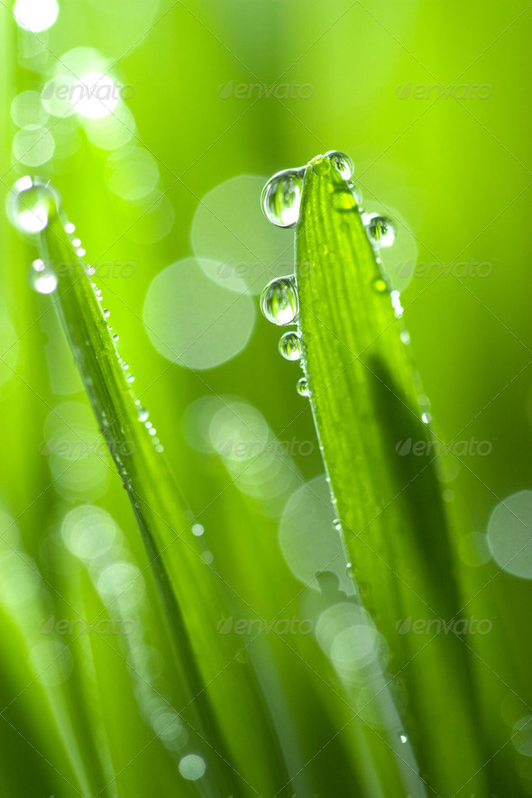 grass with water drops - Stock Photo - Images