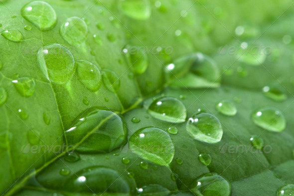 leaf with water drops - Stock Photo - Images