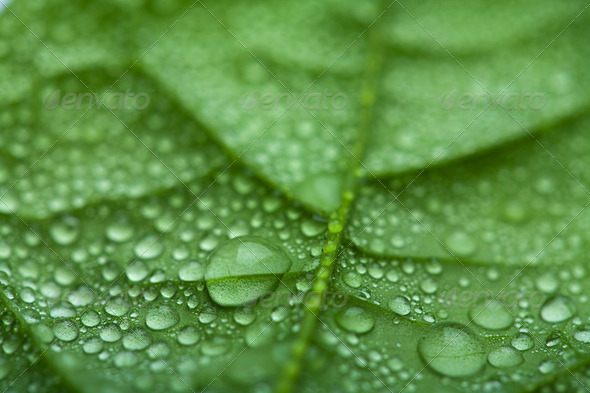 fresh leaf with water droplets - Stock Photo - Images