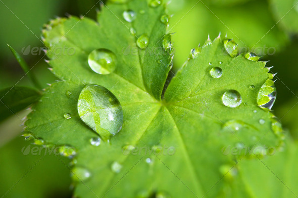fresh green leaf with water droplets - Stock Photo - Images