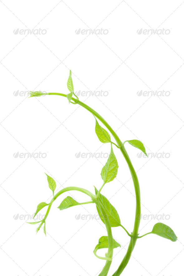 fresh leaves isolated - Stock Photo - Images