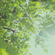 HD Slider Shot of Trees 2 - VideoHive Item for Sale