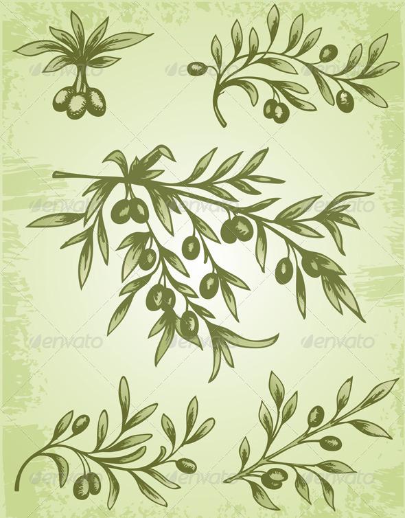 Vintage Olive Branch  - Flowers & Plants Nature