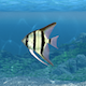 Aquarium Fish Transition - VideoHive Item for Sale