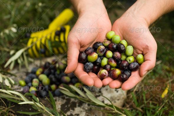 Fresh olives - Stock Photo - Images