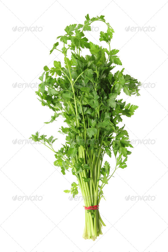 Parsley - Stock Photo - Images