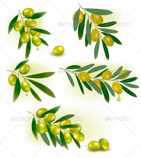 Set of Backgrounds with Green Olives Vector - Food Objects