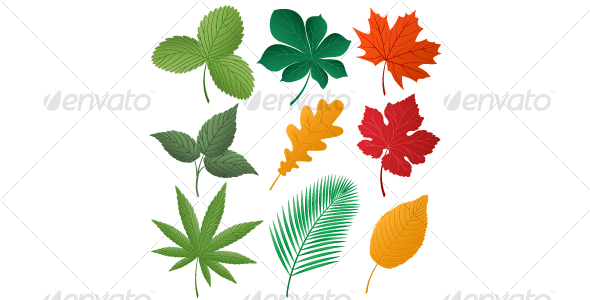 Isolated image of a leaves - Seasons Nature