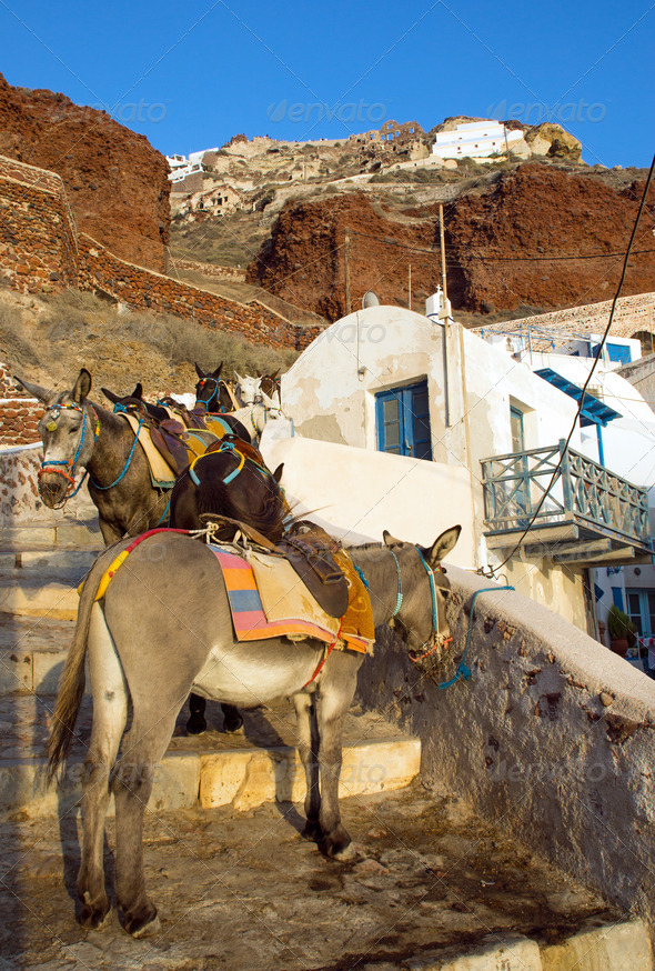 Mules waiting in Ammoudi  - Stock Photo - Images