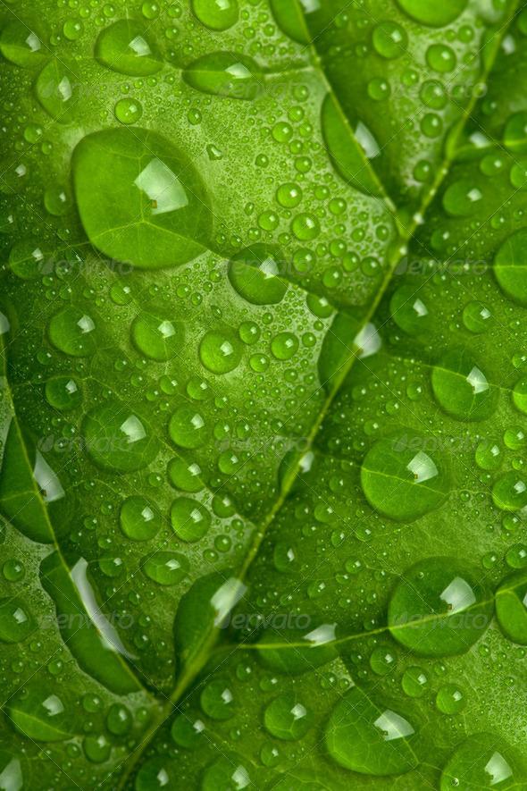 wet leaf - Stock Photo - Images