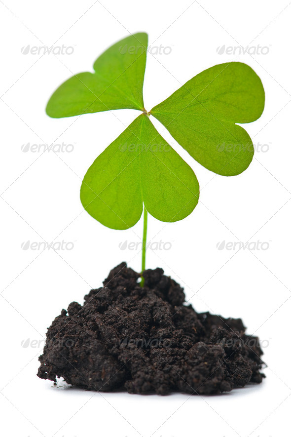 green plant in dark soil isolated - Stock Photo - Images