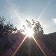The Sun behind the Foliage of an Olive - VideoHive Item for Sale