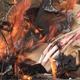 Burning Trash - VideoHive Item for Sale