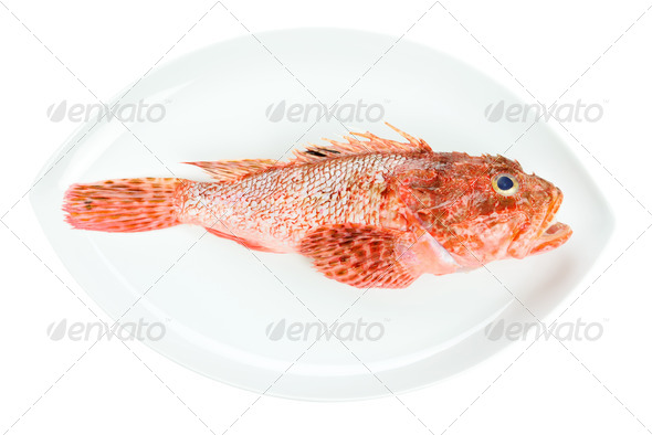 Red Scorpionfish prepared seafood oval dish isolated on white background - Stock Photo - Images
