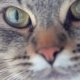 Cat Macro View - VideoHive Item for Sale