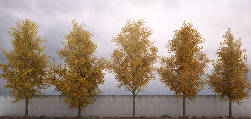 50 Low Poly Trees For 3ds Max Amp Vray By 3dtrees 3docean