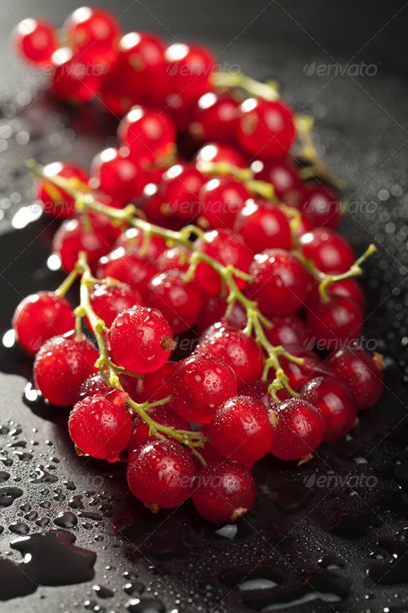 redcurrant with water drops over black - Stock Photo - Images