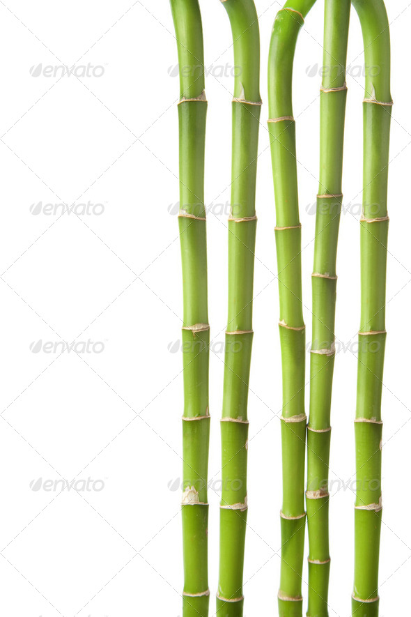 bamboo background isolated - Stock Photo - Images
