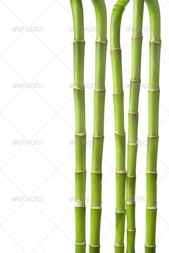 bamboo background isolated - Stock Photo - Images