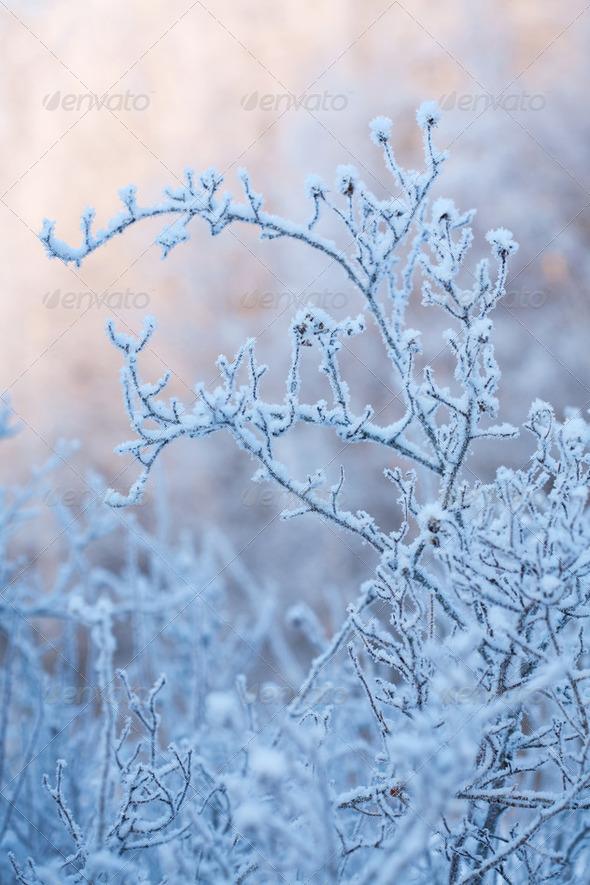 beautiful frozen winter bush - Stock Photo - Images