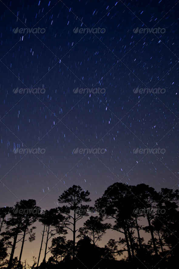star trails over forest - Stock Photo - Images