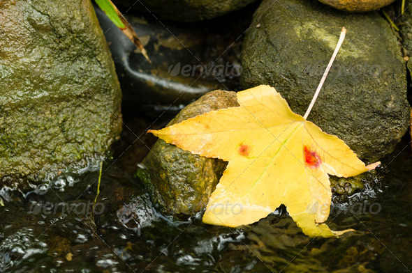 Autumnal yellow leaf - Stock Photo - Images