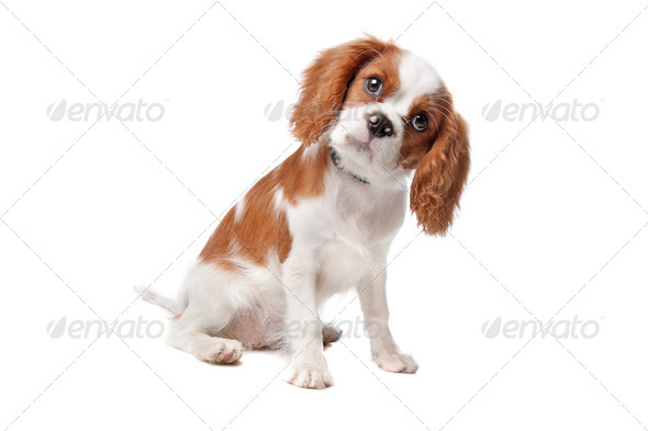 pet - Stock Photo - Images