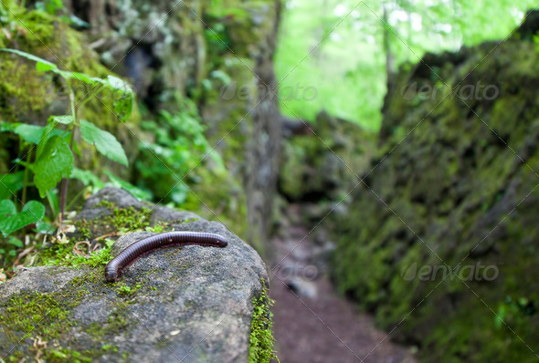 Millipede - Stock Photo - Images