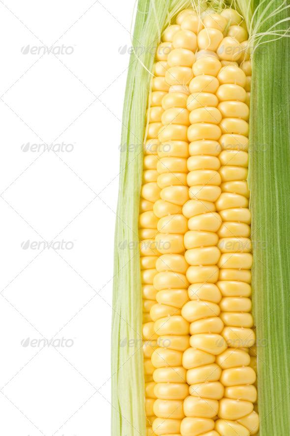 ripe yellow corn on white - Stock Photo - Images