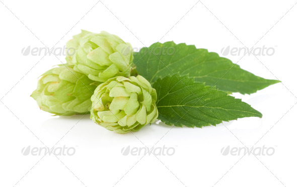 hop isolated on white - Stock Photo - Images