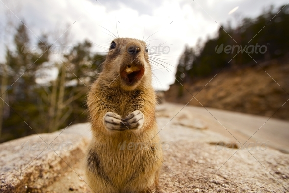 Chipmunk Dinner - Stock Photo - Images