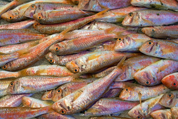 Fresh red mullet - Stock Photo - Images