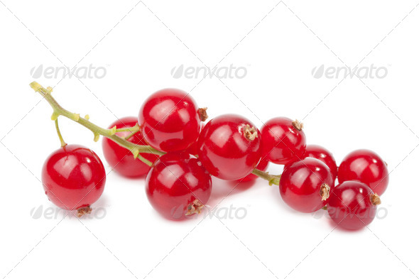 redcurrant isolated - Stock Photo - Images