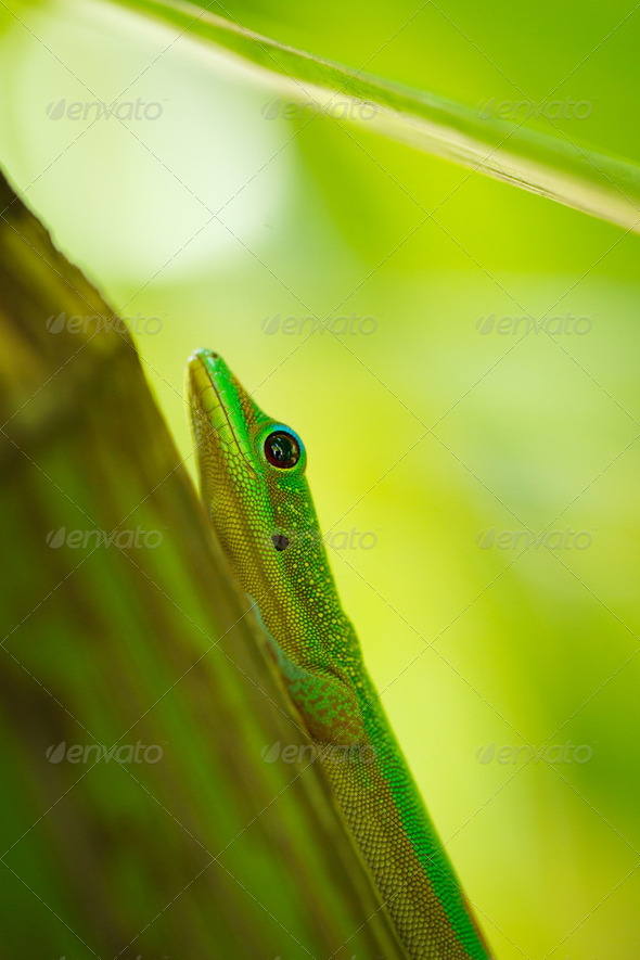 lizard - Stock Photo - Images