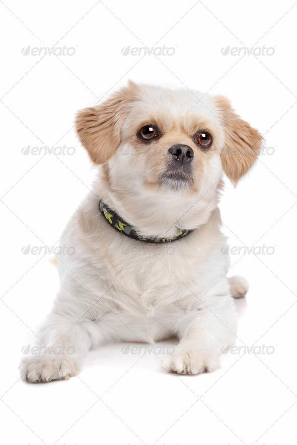 mixed breed dog - Stock Photo - Images