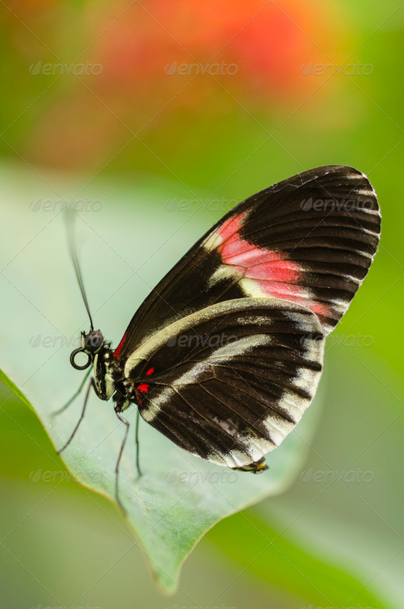 Tropical butterfly side view - Stock Photo - Images