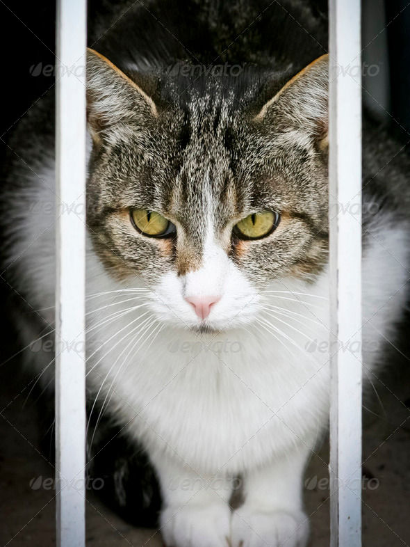 cat watching - Stock Photo - Images