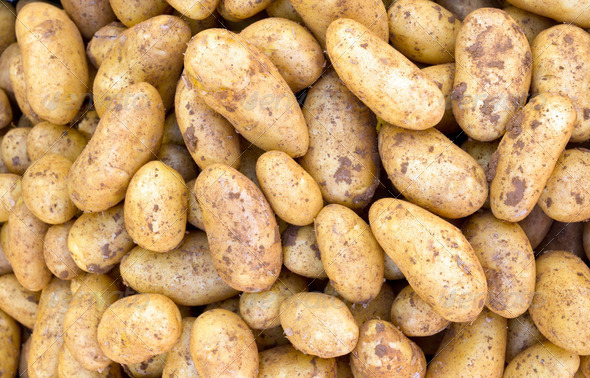 Potatoe background  - Stock Photo - Images