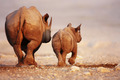Black Rhinoceros baby and cow - PhotoDune Item for Sale