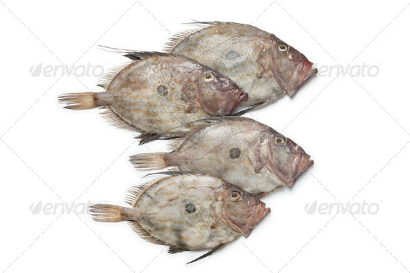 Fresh John Dory fishes - Stock Photo - Images