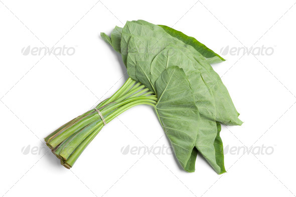 Bunch fresh Taro leaves - Stock Photo - Images
