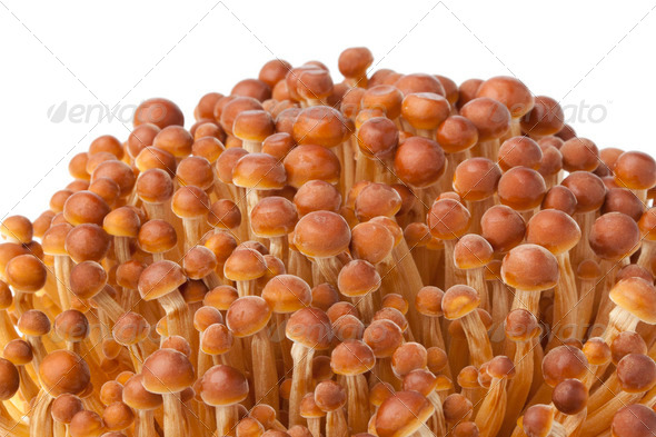 Golden Enoki mushrooms - Stock Photo - Images