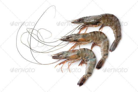 Whole fresh black tiger shrimps - Stock Photo - Images