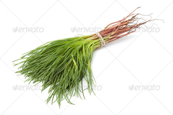 Bunch of fresh Saltwort - Stock Photo - Images