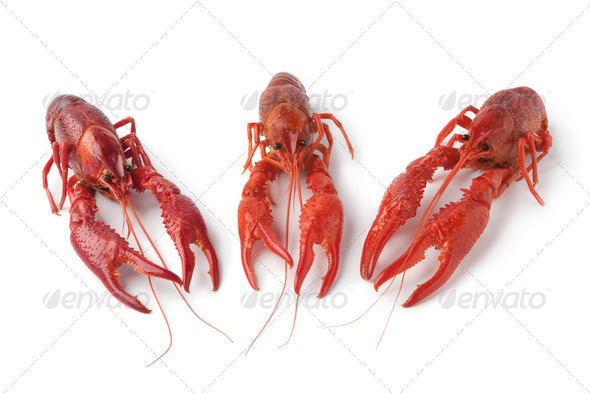 Cooked freshwater crayfishes - Stock Photo - Images